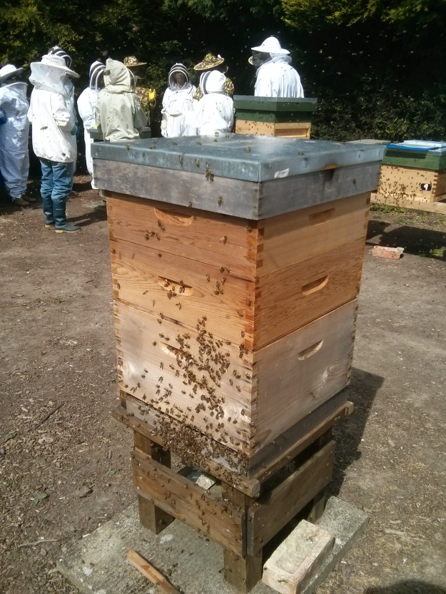 Bees recovering after an inspection.