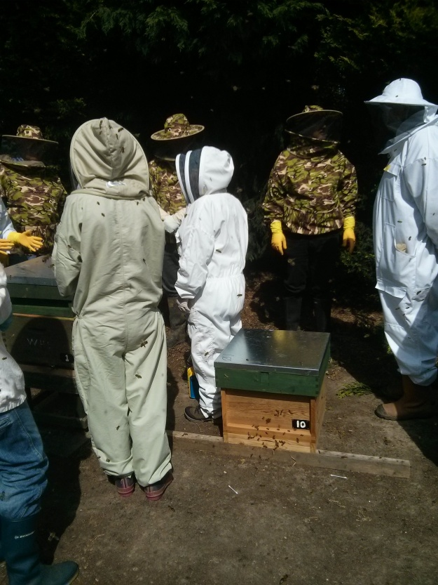 New potential beekeepers getting an introduction to what is involved.