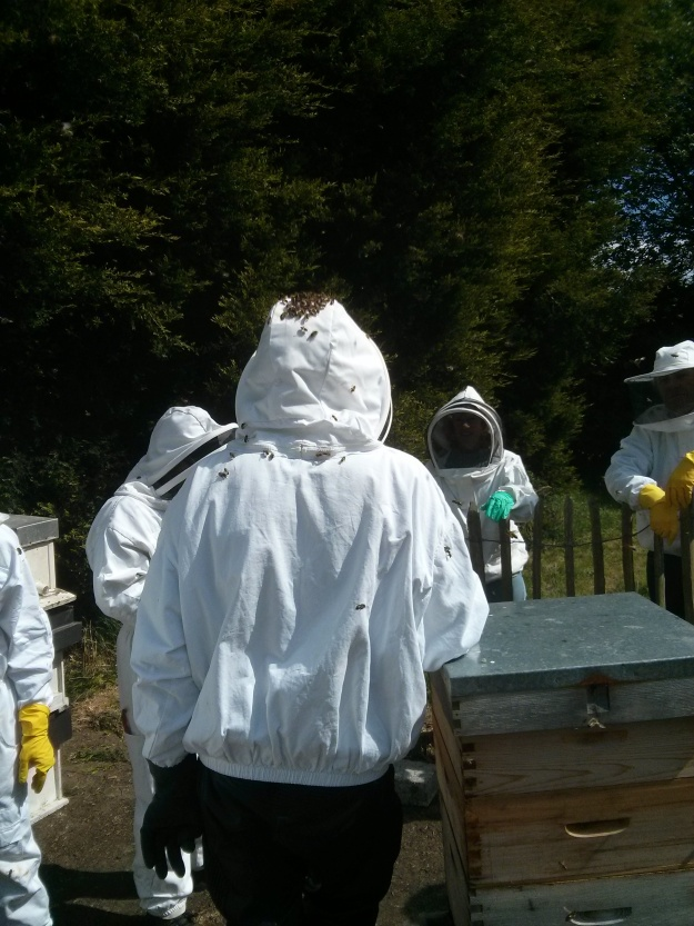 Bees and beekeeper, hanging out together.